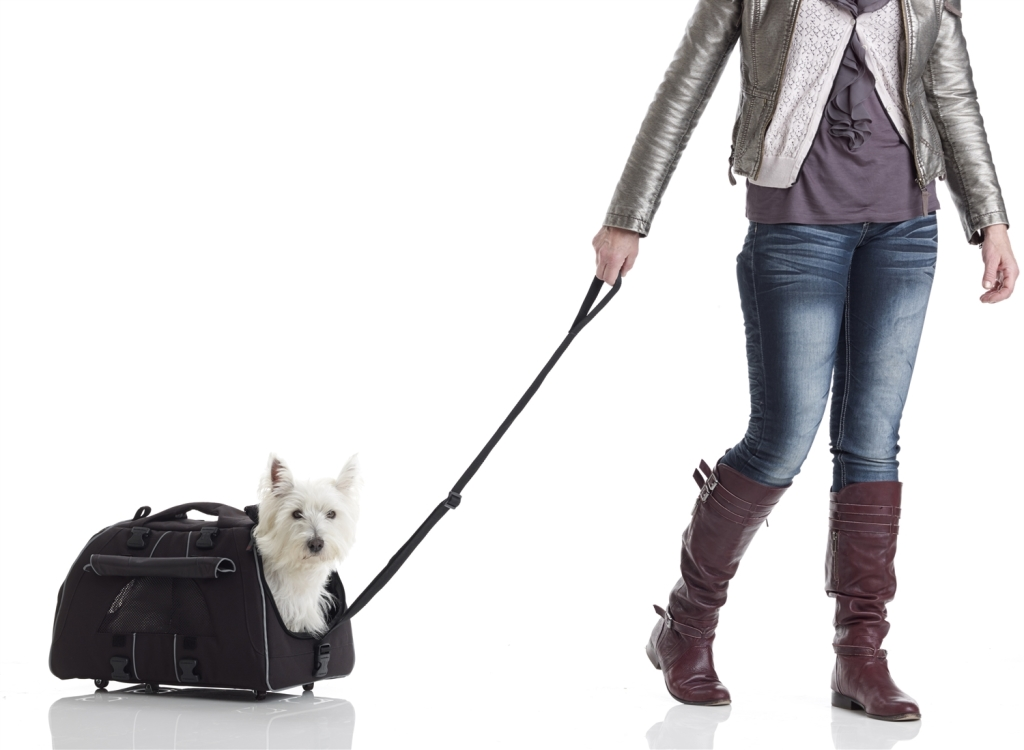 Emotional support animals are lifesavers for travellers